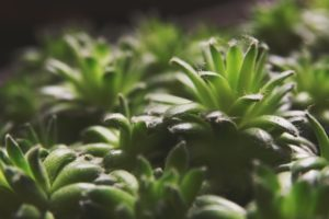 4 Tips for Getting the Most Out of Your LED Grow Lights Scottsdale